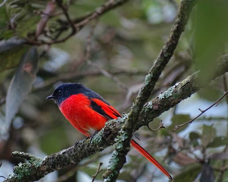 bird watching (2)