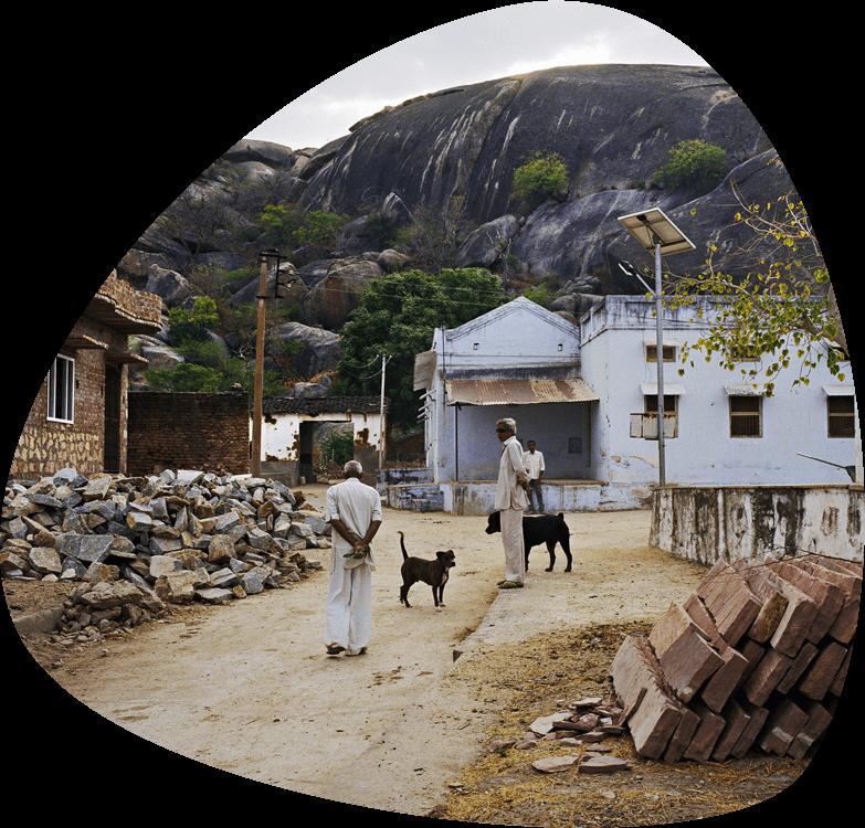 jawai village safari